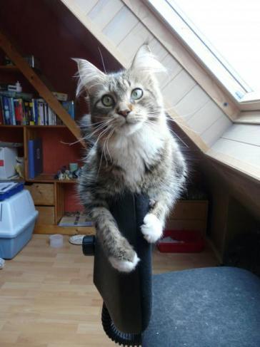Elle est un peu acrobate